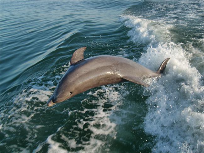 Gulf coast travel tips deep sea fishing hidden travel for Dolphin deep sea fishing