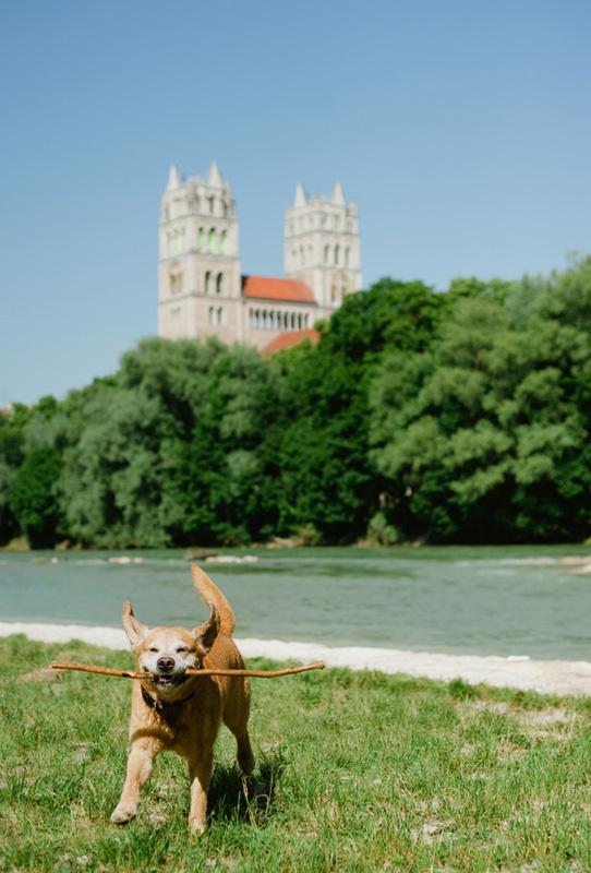 Isar Dog