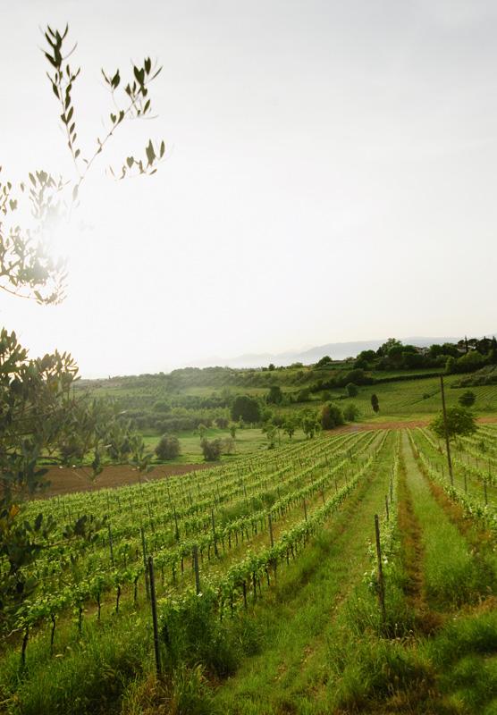 Tuscany Vinyards