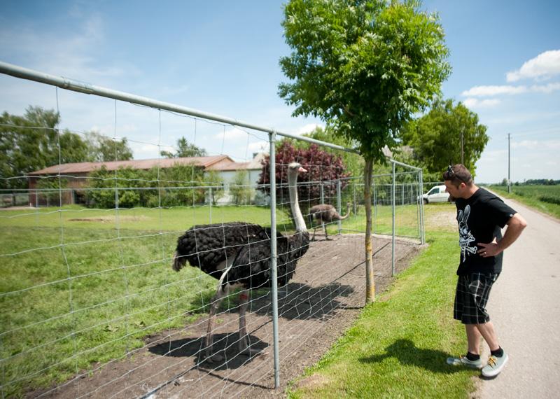 Ostrich Farm Germany