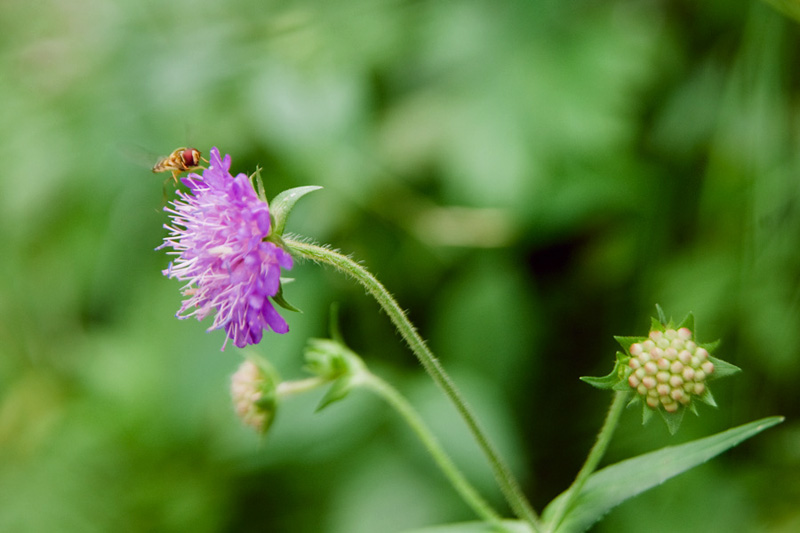 Hoellentalklamm Wildflowers