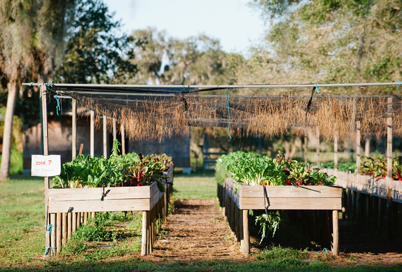 Farm to Table with King Family Farms