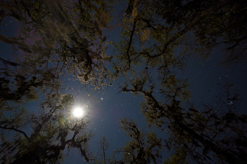 Juniper Springs Night Sky